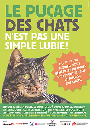 2017 action puce chat